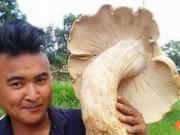 Phi thường - kỳ quặc - Phát hiện nấm khổng lồ có đường kính gần 70cm