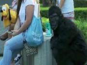 """Video Clip Cười - """"King Kong"""" xuất hiện, người dân bỏ chạy toán loạn"""