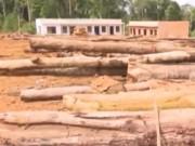 Video An ninh - Thực hư tin lâm tặc dựng lô cốt khai thác gỗ ở Lâm Đồng