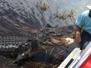 Thế giới - Video: Mạo hiểm sờ đầu cá sấu giữa đầm lầy
