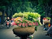 Du lịch - Hà Nội, mùa hoa về trên phố