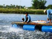 Thị trường - Tiêu dùng - Hàng trăm sản phẩm thức ăn thủy sản lưu hành trái phép