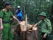 Tin tức trong ngày - Quảng Nam báo cáo Thủ tướng vụ phá rừng pơ mu
