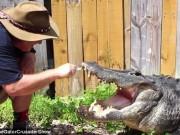 Phi thường - kỳ quặc - Video: Liều mạng đánh răng cho cá sấu khổng lồ