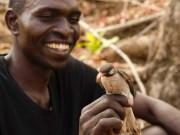 """Phi thường - kỳ quặc - Nơi chim biết """"bán"""" thông tin cho người muốn tìm tổ ong"""