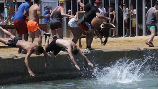 Cạn lời: Chán đấu bò trên cạn, lôi bò xuống nước
