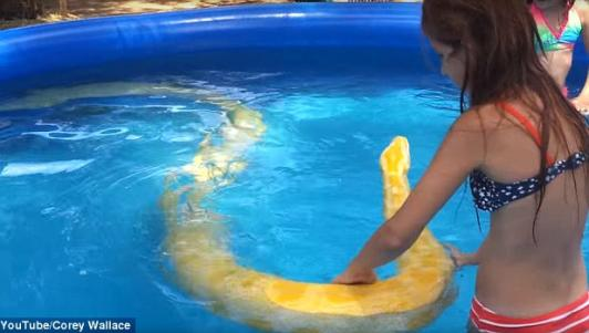 Video: Bé gái bạo gan bơi cùng trăn khổng lồ