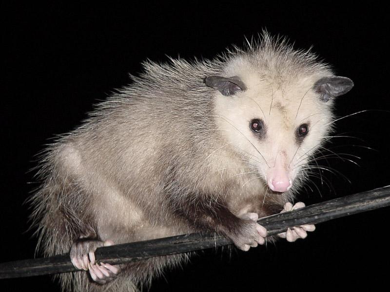 Quốc gia đầu tiên trên thế giới diệt sạch chuột? - 4