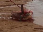 Phi thường - kỳ quặc - Video: Hoảng hồn vì đặt bẫy cua bắt được... cá sấu