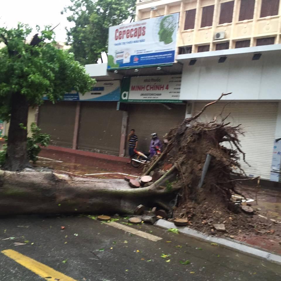 HN: Gió giật cực lớn, cây đổ ngổn ngang do bão số 1 - 14