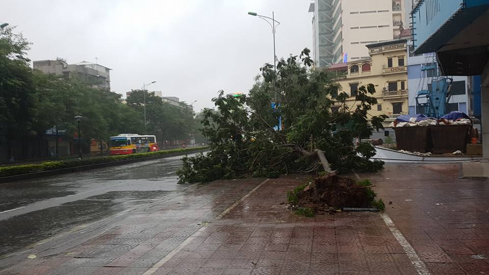 HN: Gió giật cực lớn, cây đổ ngổn ngang do bão số 1 - 10