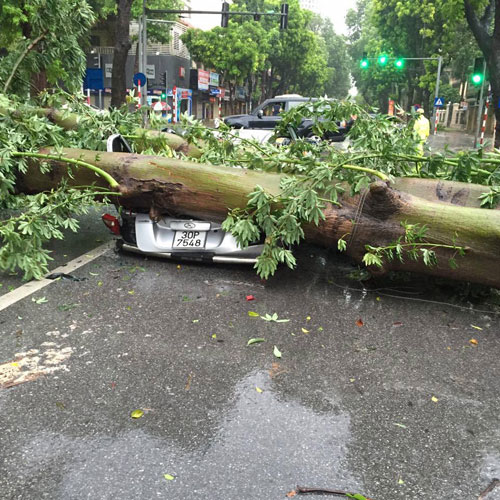 HN: Gió giật cực lớn, cây đổ ngổn ngang do bão số 1 - 6