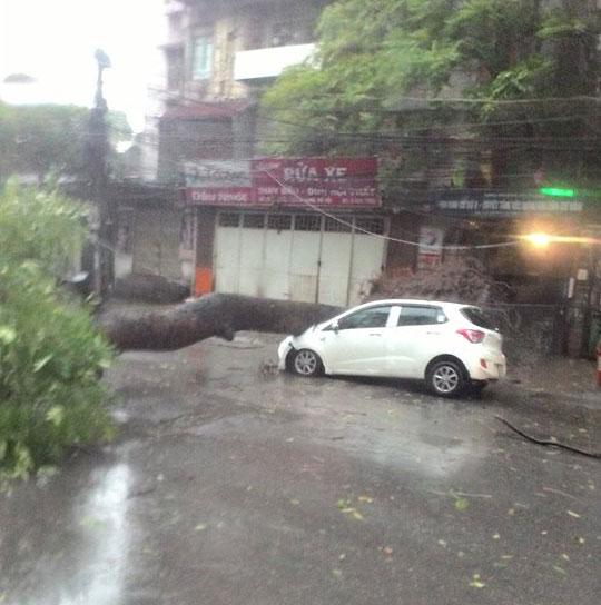 HN: Gió giật cực lớn, cây đổ ngổn ngang do bão số 1 - 5