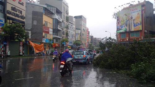 HN: Gió giật cực lớn, cây đổ ngổn ngang do bão số 1 - 12