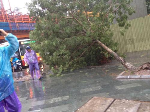 HN: Gió giật cực lớn, cây đổ ngổn ngang do bão số 1 - 23