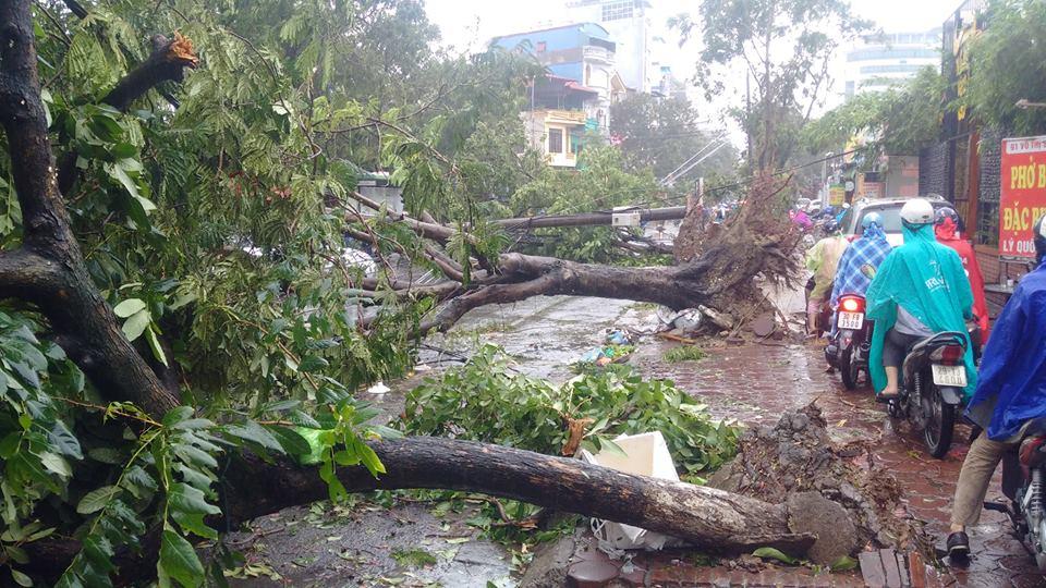 HN: Gió giật cực lớn, cây đổ ngổn ngang do bão số 1 - 15