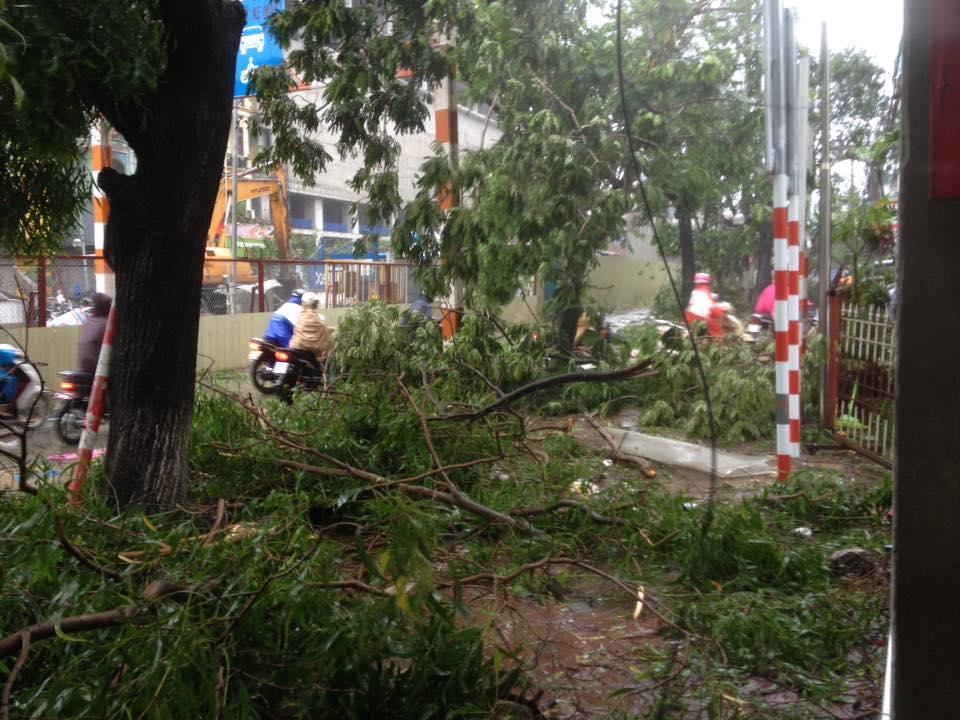 HN: Gió giật cực lớn, cây đổ ngổn ngang do bão số 1 - 21
