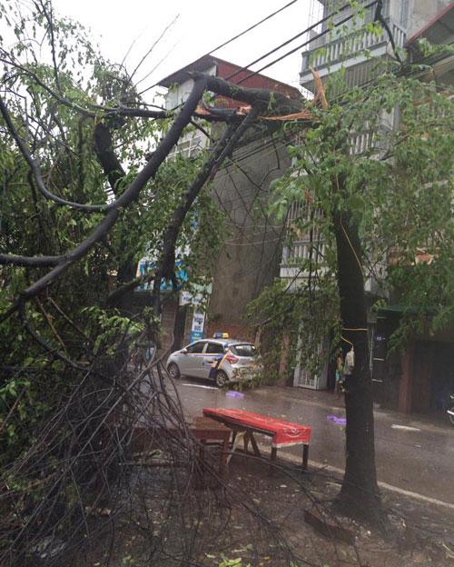 HN: Gió giật cực lớn, cây đổ ngổn ngang do bão số 1 - 22