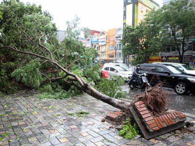 Tin cuối cùng về cơn bão số 1