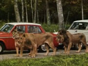 Du lịch - Du lịch Anh, đừng bỏ qua công viên thú hoang dã Longleat
