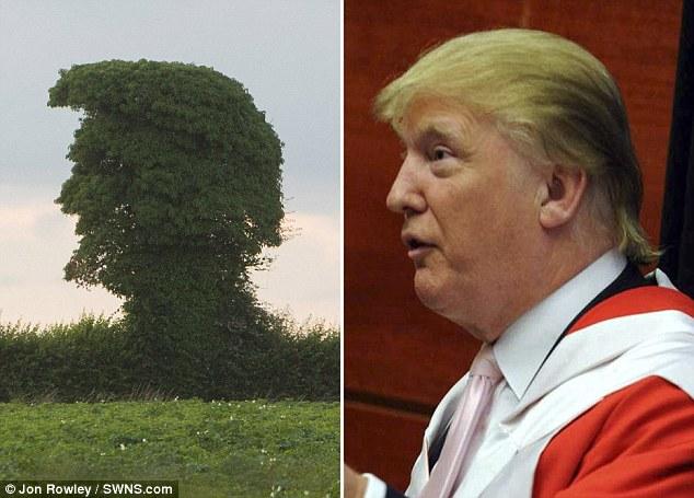 Cây lạ có hình dạng giống hệt tỷ phú Trump đang gào hét - 2