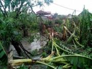 Tin tức trong ngày - Thiệt hại lớn do bão số 1: Dự báo sai hay địa phương chủ quan?