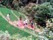 An ninh Xã hội - Vì mất trâu, giết hàng xóm rồi rủ người đào hố chôn xác