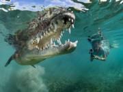 Du lịch - Ảnh: Cô gái xinh đẹp mạo hiểm lặn cùng cá sấu khổng lồ