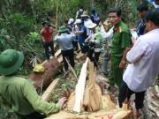 Tin tức trong ngày - Đã làm rõ được các đối tượng phá rừng pơ mu