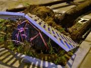 Tin tức trong ngày - Chủ tịch HN: Sẽ công bố đơn vị trồng cây cả bầu nilon