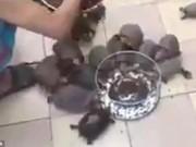 """Phi thường - kỳ quặc - Video: Rùa chạy """"như bay"""" khi chủ gọi cho ăn"""