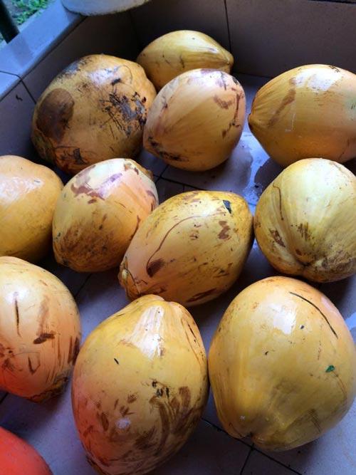 Mẹ Việt đưa giống cây sang Malaysia phủ kín vườn 200m2 - 13