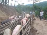 Thị trường - Tiêu dùng - Tái xuất khẩu lợn hơi sang Trung Quốc