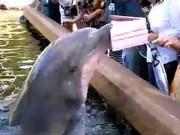 Phi thường - kỳ quặc - Video: Sững người vì bị cá heo cướp máy tính bảng