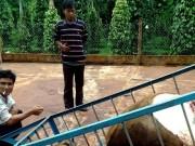 An ninh Xã hội - Trộm bò rồi chặt lấy 2 cái đùi