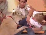 Thế giới - Video: Sư tử vồ em bé ngay trên sóng truyền hình Mexico