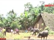 Video An ninh - Thảm sát ở Lào Cai: Nghi can từng yêu nạn nhân