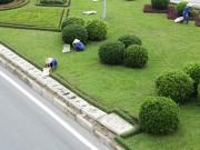 Tin tức trong ngày - Cắt cỏ đại lộ Thăng Long, công nhân được trả bao nhiêu?