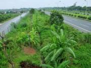 Tin tức trong ngày - Hà Nội bỏ hàng loạt hạng mục chi phí 'cắt cỏ, tỉa cây'