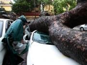 Tin tức trong ngày - HN: Bão Thần Sét giật tung 100 gốc cây, làm bị thương 2 người