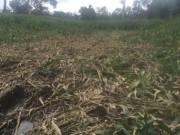 Tin tức trong ngày - Đàn voi rừng 20 con bất ngờ kéo về tàn phá buôn làng