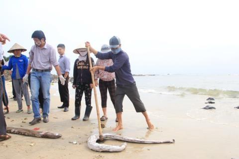 Biển miền Trung sẽ tự đào thải độc tố?