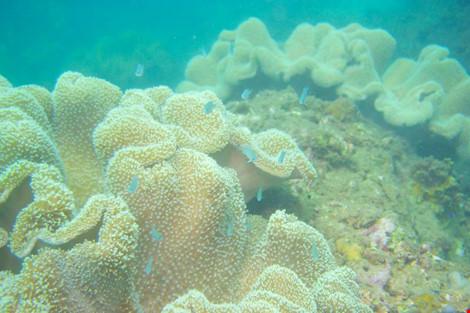Biển Cù Lao Chàm tuyệt đẹp dưới ống kính du khách - 2