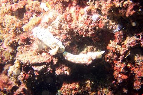 Biển Cù Lao Chàm tuyệt đẹp dưới ống kính du khách - 3