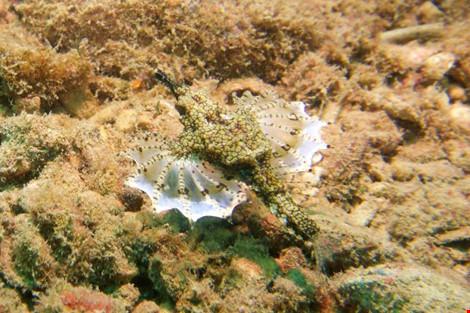 Biển Cù Lao Chàm tuyệt đẹp dưới ống kính du khách - 9