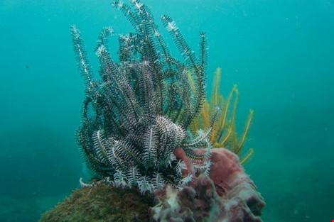 Biển Cù Lao Chàm tuyệt đẹp dưới ống kính du khách - 10