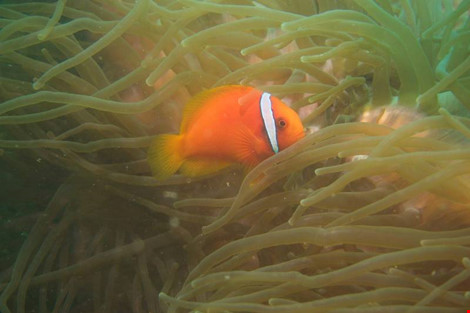 Biển Cù Lao Chàm tuyệt đẹp dưới ống kính du khách - 11