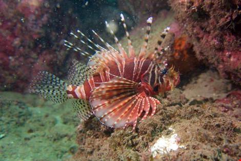 Biển Cù Lao Chàm tuyệt đẹp dưới ống kính du khách - 12