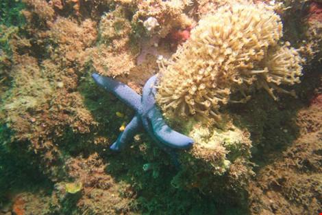 Biển Cù Lao Chàm tuyệt đẹp dưới ống kính du khách - 13