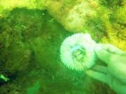 Tin tức trong ngày - Biển sạch phải là khi cá tôm trở lại